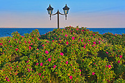 Roses and lights on trail along the North Shore of the Gulf of St. Lawrence<br />