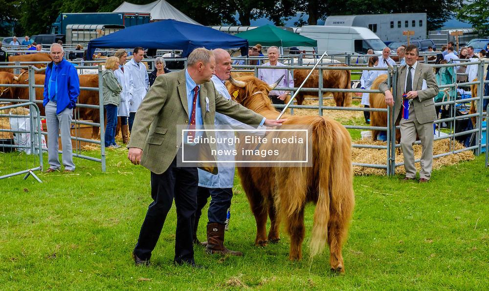 Biggar, South Lanarkshire, Scotland 23 July 2016<br /> <br /> Judging highland cattle in the show ring.<br /> <br /> (c) Andrew Wilson | Edinburgh Elite media
