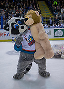 KELOWNA, CANADA - DECEMBER 02:  Rocky Raccoon and a bear at the Teddy Bear Toss at the Kelowna Rockets game on December 02, 2017 at Prospera Place in Kelowna, British Columbia, Canada.  (Photo By Cindy Rogers/Nyasa Photography,  *** Local Caption ***