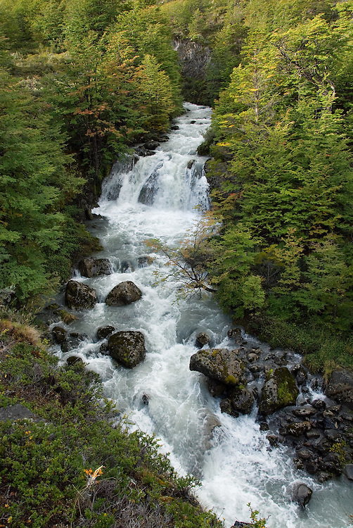 Steep mountain stream flowing through a forest in Torres Del Paine National Park, Patagonia, Chile.