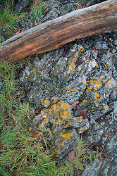 Shoreline Detail, Posey Island, Washington, US