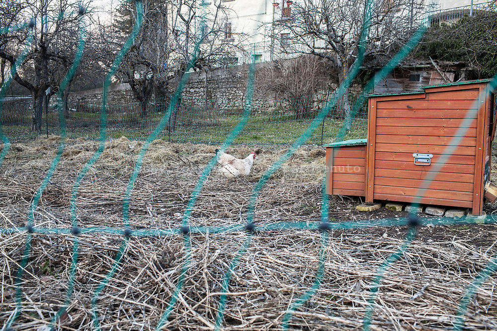 16 February 2017, Civitella Alfedana, AQ Italy - Hens under protection by the eletric fence against the attack from wolfs, inside the private field in the Villagge of Civitella Alfedana.