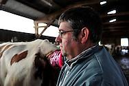 25/04/12 - AMBERT - PUY DE DOME - FRANCE - Campagne d insemination de vache laitiere par Jean Yves GERVAIS, Technicien chez GENESIA - Photo Jerome CHABANNE