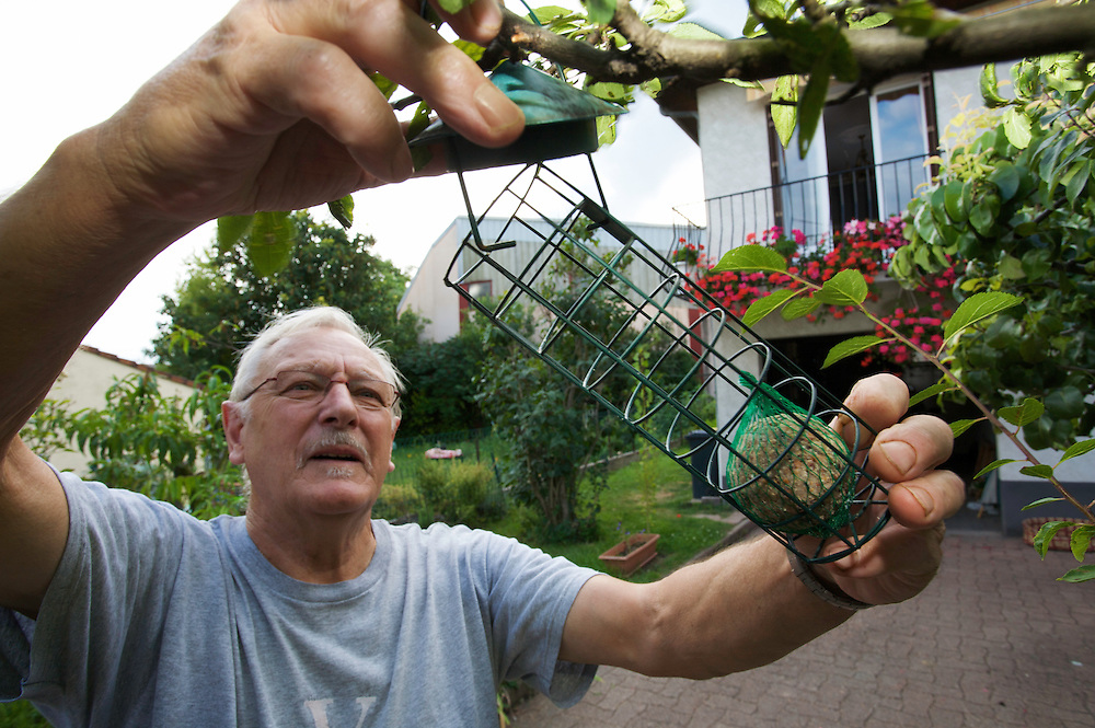 Ms. Augustin Baduel feeding birds on his drive-way in Sentes des Enghardes in Pont-du-Chateau, Auvergne, France.