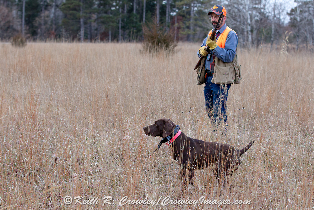 John Zeman hunts pheasants with a six-month old GSP pup in Minnesota