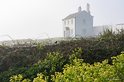 Coastguard cottages in gentle morning sunlight passing through thick fog at Trwyn Du. These houses are so grand for such a remote and exposed spot. A blackbird hopping along the wall was the only movement in this gentle Spring stillness and it's song the only sound balancing the melancholy 'dong' of the lighthouse bell.