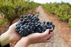 Australian Wine, Penfolds