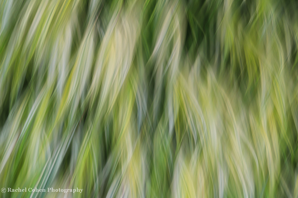 &quot;Ride the Wind&quot;<br />