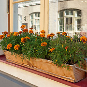 Windowbox in Tallinn, Estonia