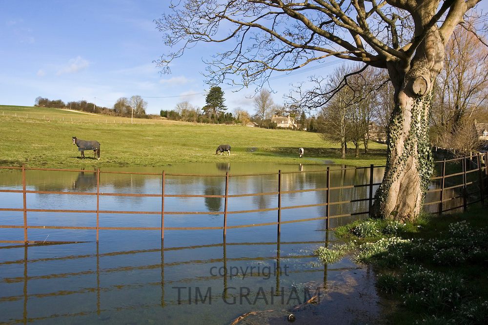 Horses graze in flooded field in Oxfordshire, The Cotswolds, United Kingdom