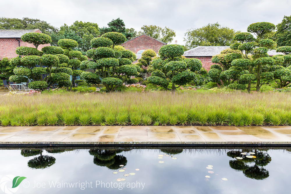 Cloud pruned hornbeams at Cogshall Grange, Cheshire - photographed in July.  This private garden, designed by Tom Stuart-Smith is open for charity through the National Gardens Scheme