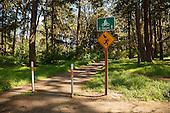 Trail at Bush Pasture Park