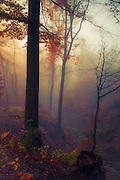Sunrise in a misty fall forest
