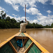 A man steers a boat on the Los Amigos River in the lowland Amazon rainforest