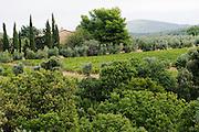 ITALY, Bolgheri (LI)<br /> Vineyards in the Maremma, near Bolgheri, at harvest time