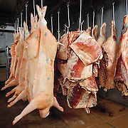 Butchered pork hanging from hooks in meat locker