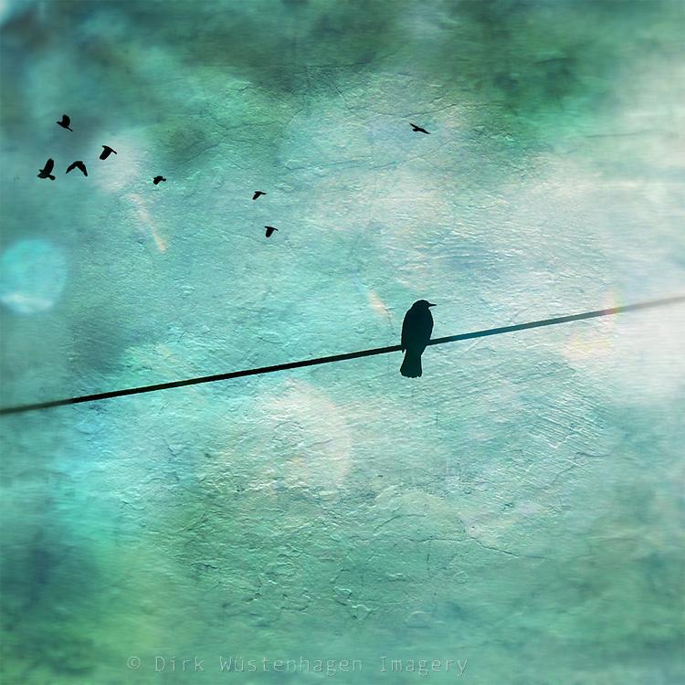 Bird on a power line. Texturized on iPhone.