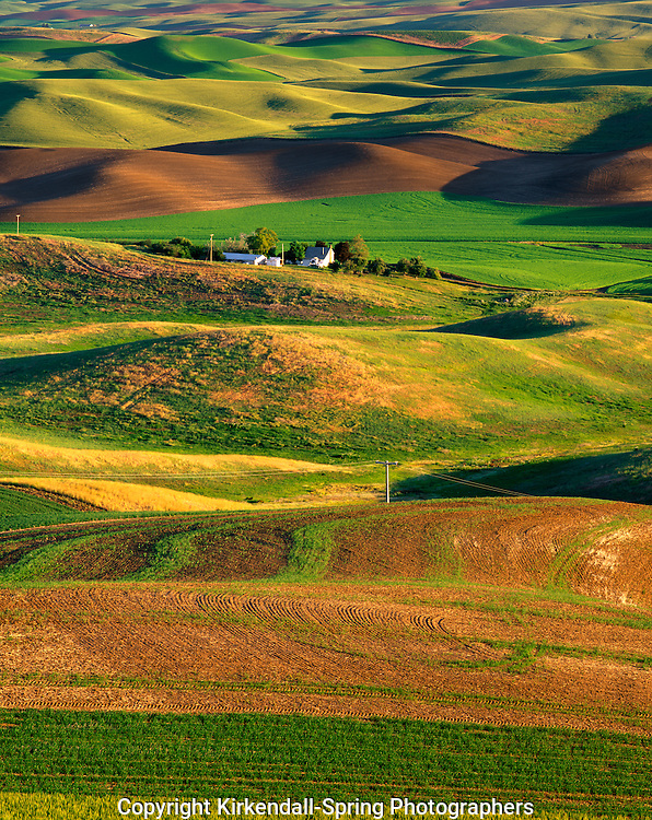AA07350-01...WASHINGTON - Farm house among the wheat fields from Steptoe Butte State Park in the Palouse region.