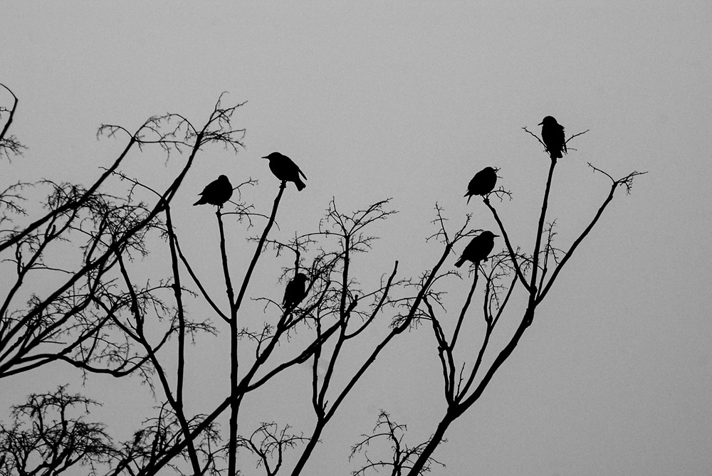Birds sitting on tips of tree branches. Weehawken, NJ