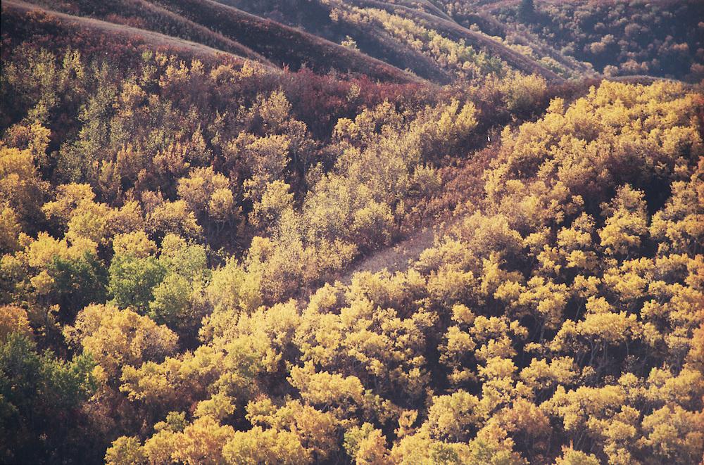 Golden fall foliage colours the Qu'Appelle Valley, Saskatchewan