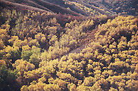 Golden fall foliage colours the Qu'Appelle Valley, Saskatchewan