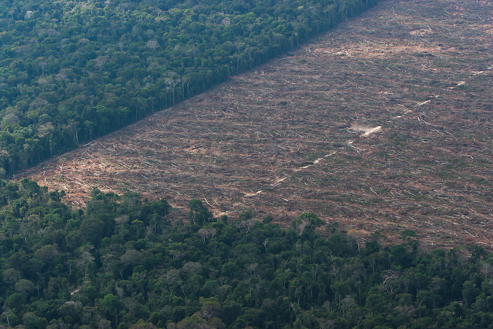 "06/08/05. Flight around Sinop and the ""Parque das Castanheiras"" . The Brasilian Nut Tree ""Castanheira"" is protected in Brasil, but plenty had been logged (some where left alone standing on the soy fields)...(c)Daniel Beltra/Greenpeace"