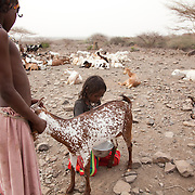 All girls go through FGM in Afar, a practise AISDA seek to eradicate. Hawa and Sabira milk a goat to get milk for breakfast. The Afar diet is mainly milk with some rice or bread. The rice and flour is import to the region so its not every day they can eat that.  Action for Integrated Sustainable Development Association (AISDA) work in the AFAR region of Eastern Ethiopia, based in Delafagi. The Afars practise an old tradition of Female Genital Mutilation where the baby girls has her clitoris and labia cut away and her vagina sewn up. The day before her wedding day the girl is un-stiched ready for marriage. Its a brutal and barbaric tradition which AISDA is challenging with great effect, now more than a hundred girls in Dowe district have been saved from the knife and AISDA is now rolling out the scheme in Delafagi. Delafagi is where the oldest ever human remains have been found, the found is thought to be 4.5 mill years old.
