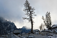 Larch trees and low clouds in the Enchantment Lakes Wilderness Area, Washington Cascades, USA.