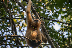 Cambodia - Gibbons & Jungles