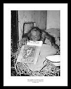 This great shot of baby orang-utan Lily by Lensmen Photographic Agency is the perfect gift idea for people that love art, culture and history.