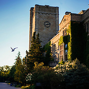 A side view of Johnston Hall with a bird flying by. Photo by Claire Teri