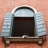 Images from Venice  - Fotografie di Venezia...***Agreed Fee's Apply To All Image Use***.Marco Secchi /Xianpix.tel +44 (0)207 1939846.tel +39 02 400 47313. e-mail sales@xianpix.com.www.marcosecchi.com Cats in Venice