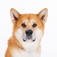 2017_11_15 - Corrinne Mullen Pet Portraits