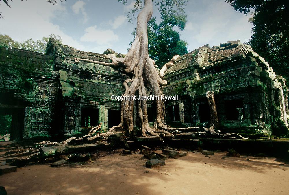 Siem Riep 1999 Ankor Wat<br /> Templet Ta Prohm<br /> Der stora Khmer tempelomr&aring;det vid Siem Riep<br /> <br /> ----<br /> FOTO : JOACHIM NYWALL KOD 0708840825_1<br /> COPYRIGHT JOACHIM NYWALL<br /> <br /> ***BETALBILD***<br /> Redovisas till <br /> NYWALL MEDIA AB<br /> Strandgatan 30<br /> 461 31 Trollh&auml;ttan<br /> Prislista enl BLF , om inget annat avtalas.
