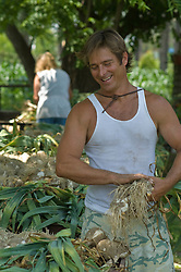Man in a tank top gathering garlic at a farm
