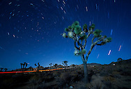 Joshua Tree Park in the Mojave Desert in California