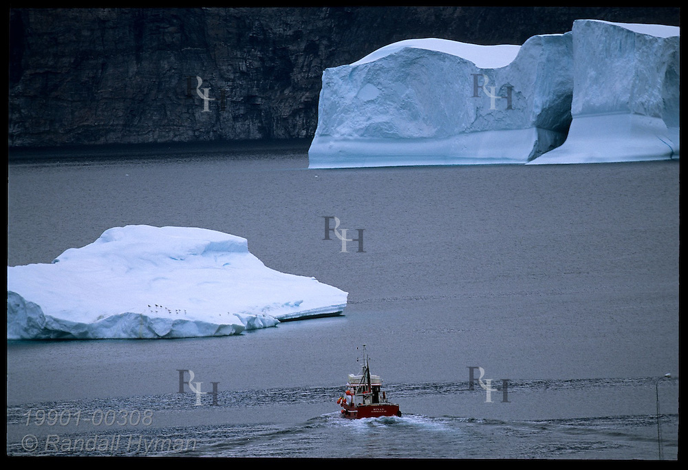 Fishing boat heads across fjord toward icebergs; Uummannaq, western Greenland