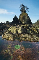 Tide pool at Point of the Arches, Olympic National Park Washington