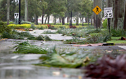 September 10, 2017 - Wellington, Florida, U.S. - Palm fronds scattered by hurricane Irma on Olive Road near the Mall at Wellington Green in Wellington, Florida on September 10, 2017. (Credit Image: © Allen Eyestone/The Palm Beach Post via ZUMA Wire)