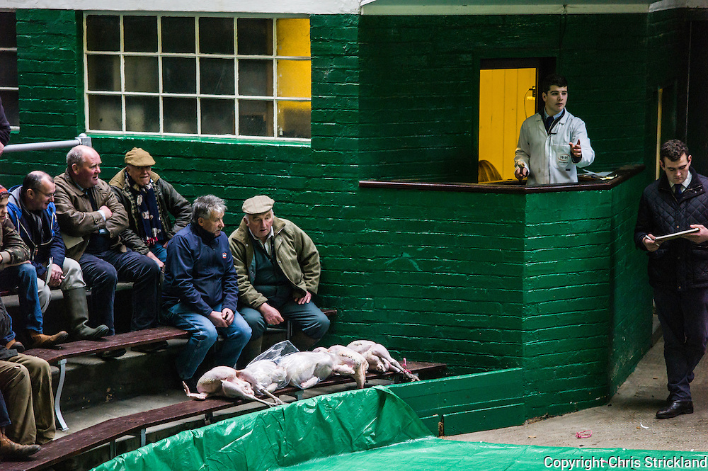 Newtown St. Boswells, Melrose, Scotland, UK. 22nd December 2015. Christmas poultry, including geese, turkeys, pheasants, ducks, and chickens, are auctioned at an agricultural auction mart in the Scottish Borders three days before Christmas.