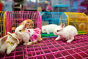 16 FEBRUARY 2013 - BANGKOK, THAILAND:    Little rabbits for sale in Chatuchak Weekend Market in Bangkok. It is reportedly the largest market in Thailand and the world's largest weekend market. Frequently called J.J., it covers more than 35 acres and contains upwards of 5,000 stalls.        PHOTO BY JACK KURTZ