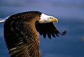 WILD BIRDS - RAPTORS