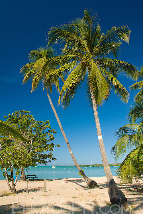 Palm trees, white sandy beach and calm turquoise waters
