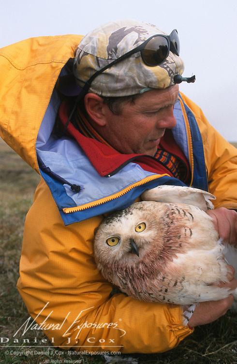 Denver Holt holding a female snowy owl (Bubo scandiacus). Barrow, Alaska