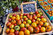 Locally grown tomatoes on display at the Farmers Market along Main Street in downtown Greenville, South Carolina.