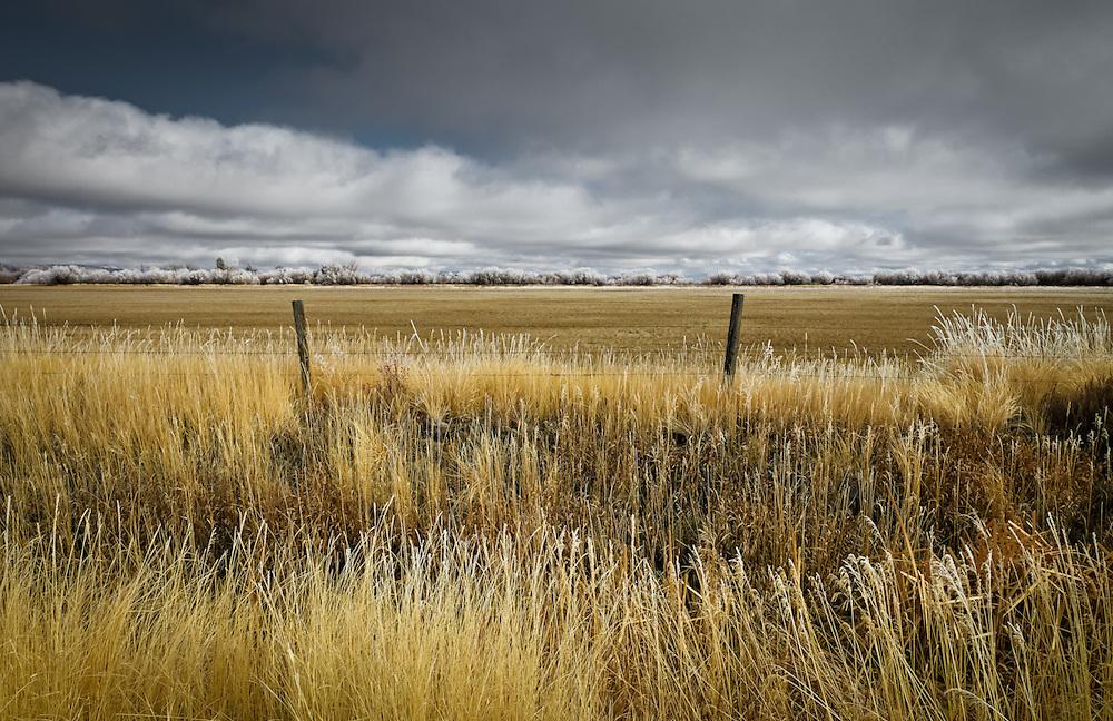 Frost on the grasses, Fairfield Idaho