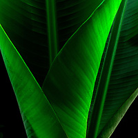 Banana Leaf.  These pieces are all created in Hawaii from Hawaiian plants.