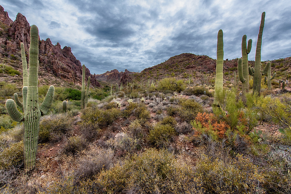 Landscape in The Superstitions, southern Arizona, USA