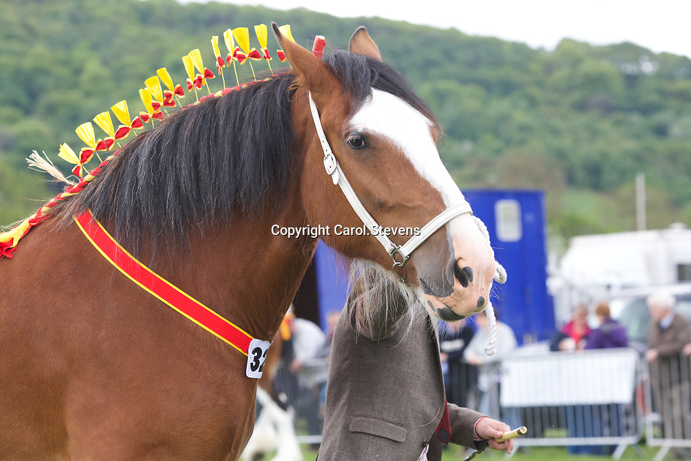 Ebs Whittaker's 5 year old Mare ST GILES MORGANA<br />