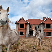Horses in a field in front of a new house which has been left unfinished in Co Leitrim. Leitrim is the worst affected county in Ireland with a housing stock that it is estimated will take 9 years to clear.